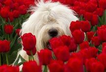 VALENTINE PETS / We love pets and nothing could be better than showing your appreciation of them on Valentine's Day. Dr Jo