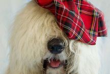 TARTAN PAWS / Being Scottish, I love tartan. And, of course, I also love pets. Hence TARTAN PAWS :)