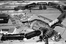 Cats & Trains