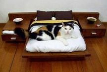 PETS AT HOME / Pets make a house a home. Here are pets within their homes and home items that make pets more comfortable and loved. Enjoy!