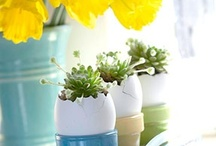 Easter Ideas / There goes Peter Cottontail