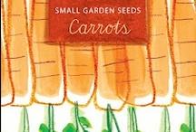 carots karotten gelbe rüben beets