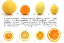 agrumi, lemon orange grapefruit zitrone limette