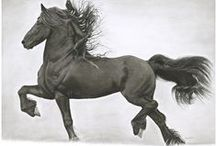 Equine Artists / This is the place to find an artist to reproduce your beloved horse enjoy forever.