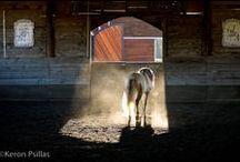 Lustino Horse