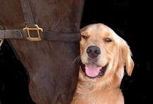 Cute / Funny horses