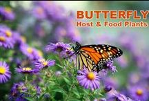 Butterfly Plants / Plants and flowers that attract butterflies or provide habitat for their caterpillars