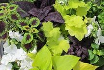Container gardening / Examples of beautiful container gardens - use as inspiration for your garden