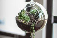 Plants ~