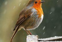 SJ {loves} birds