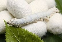 Silkworm to Silk Fabric / How Silk is Made: From Silkworm to Silk Fabric
