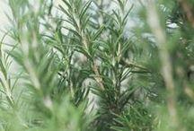 Herbs - garden