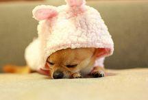 <3 Bunnies
