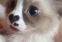 ¡¡¡¡¡¡Love♡Cats♡Love!!!!! / I mici più belli di sempre!!