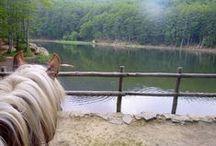 A cheval dans le monde / Promenades à cheval lors de mes voyages autour du monde - récits de voyage, escapades, photographies, carnets pratiques, articles de blog et inspiration voyageuse à cheval