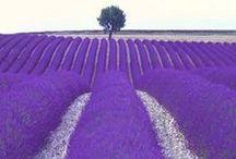 The World is Purple!!! Violet lilla