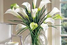 Kwiaty / flowers