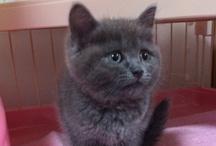Mouko-cat