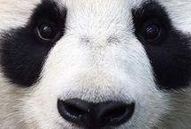 Panda tu Panda tam / Znajomi i rodzina zasypują nas zdjęciami, grafikami i śmiesznymi historiami z Pandą w tle. Nie możemy już sami cieszyć się tym dobrem. Nie mamy jeszcze jego nazwy. Macie jakiś pomysł? Oto zdjęcia, które otrzymaliśmy