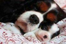 Doggies Woof!
