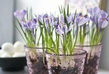 Frühling - Spring / Frühlingserwachen im Garten, auf dem Balkon und der Terrasse. Deko, Blumen und Selbstgemachtes - so schön ist der Frühling!