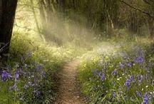 Landschaften & Natur - Landscapes & nature / Wunderschöne Landschafts- und Naturaufnahmen