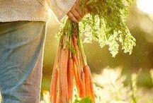 Gemüsegarten - Vegetable garden