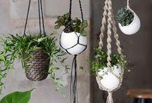 Vertikales Gärtnern / Nicht genügend Platz für euer Grün? Dann gärtnert doch mal in die Höhe.