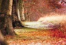 Herbst - Autumn / Der Herbst von seiner schönsten Seite!