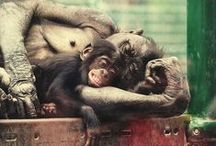 Animals & Wildlife / Animal photographers on www.youpic.com