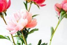 FLOWERS // FLEURS