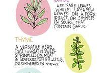 Herbs / Everything regarding herbs
