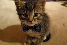 Cutest of the cute / One day, I'll convince a very allergic boyfriend that we need a kitten. I'm convinced showing him pictures will change his mind.