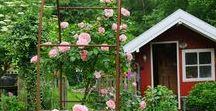 KatiesGarden / Gartenträume