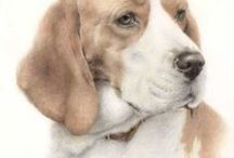 Portrait drawing of dogs, by Susan Brinkmann / Portrait drawings of dogs, made with coloured pencils
