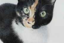 Drawings of cats, by Susan Brinkmann / Coloured pencil drawings of cats
