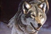Волки Лисы ДК
