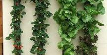Gardening / Pot gardening ideas and tips