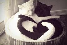 Big cats/ little cats/Black cats / by Jon M Cole