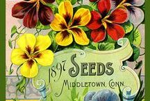 Garden - Seed Packets & Catalogues / Vintage / by Nina Holmberg