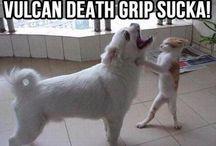 Haha Hilarious☆ / Funny stuffssss! / by Kat S. =^^=