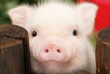 """Animals - Pigs / Grisar / Pigs of all kind!           Also see my boards: """"Birds"""" and  """"Creatures in water & on land""""....."""