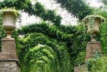 Gardens / All about gardens and gardening