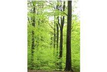 Birches, Oaks & Beech Trees -  Björkar, Ekar & Bokar / I love those trees!