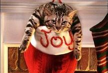 Holiday Cats / All things involving holiday cheer and cats, kittens and furry friends!