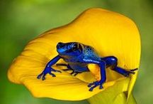 """Animals - Frogs / Grodor / Frogs of all kind!               Also see my boards: """"Birds"""" and  """"Creatures in water & on land""""....."""