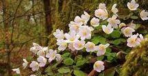 FLOWERS / Dammi odoroso all'alba un giardino di fiori bellissimi dove io possa camminare indisturbato. (Walt Whitman)