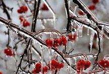 ❄INVERNO❄ / La vita del cristallo, l'architettura del fiocco di neve, il fuoco del gelo, l'anima del raggio di sole.  La frizzante aria invernale è piena di queste cose.  (John Burroughs)