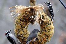 Feed the Birds!