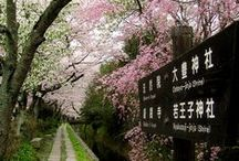 Country - Japan